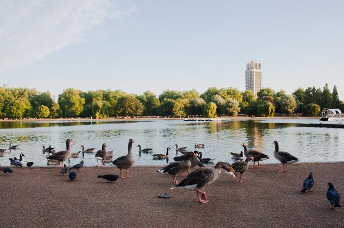 Londýn a Hyde park