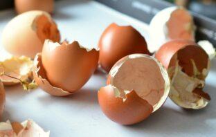 škrupiny z vajíčok
