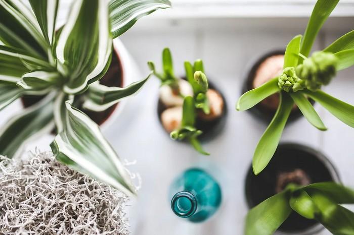 ktoré izbové rastliny do ktorej miestnosti