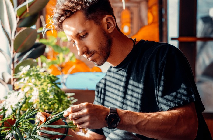 rastlina žltne a vädne