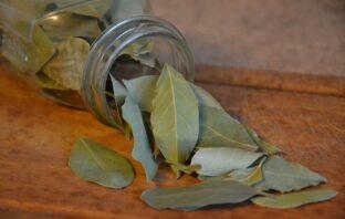 bobkový list vavrín pravý