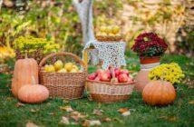 jesenné premeny v záhrade